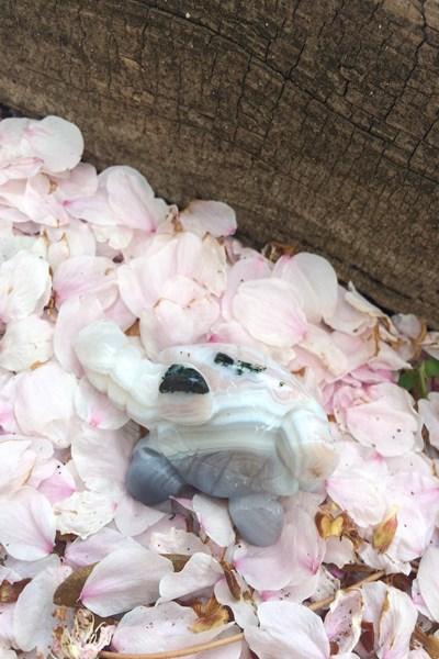 カメ 亀 メノウ 瑪瑙 パワースポット パワーストーン ホワイトメノウ